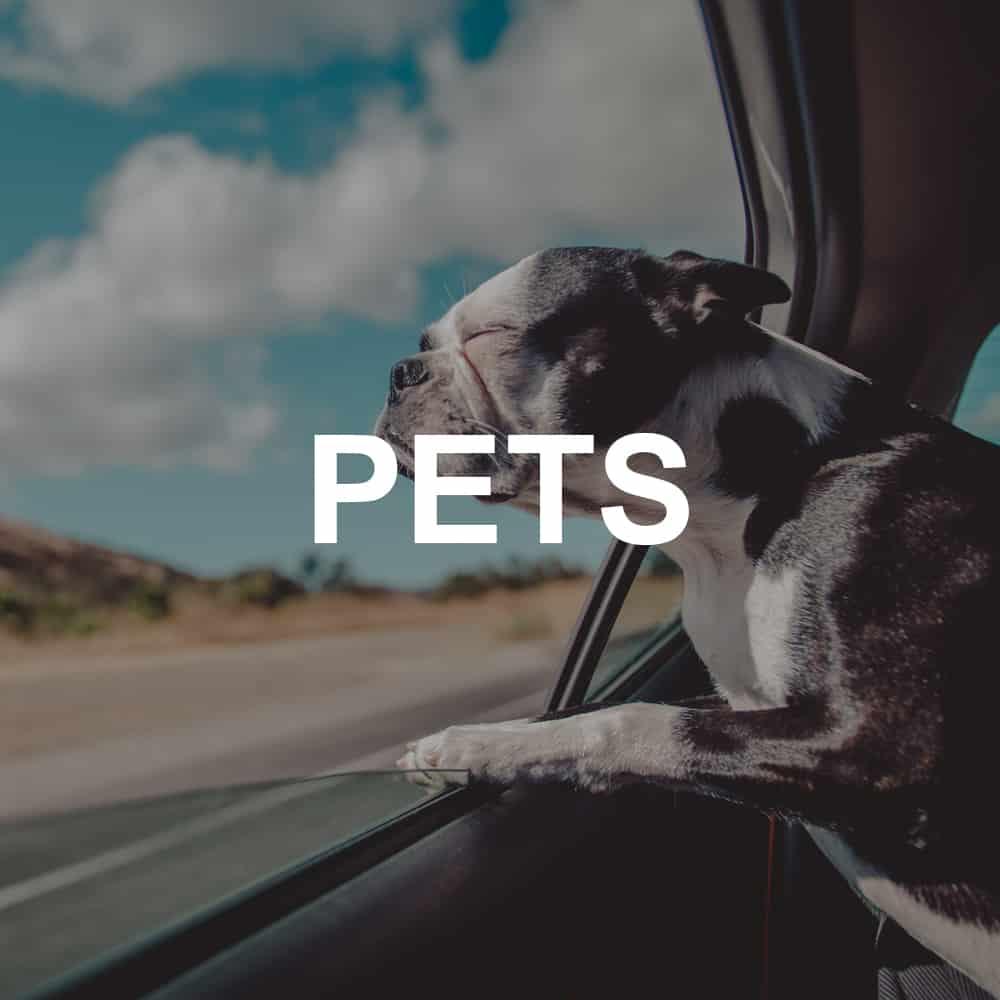 Pets-1000x1000